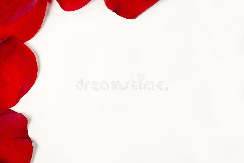 płatek rabatowa czerwień wzrastał zdjęcia stock