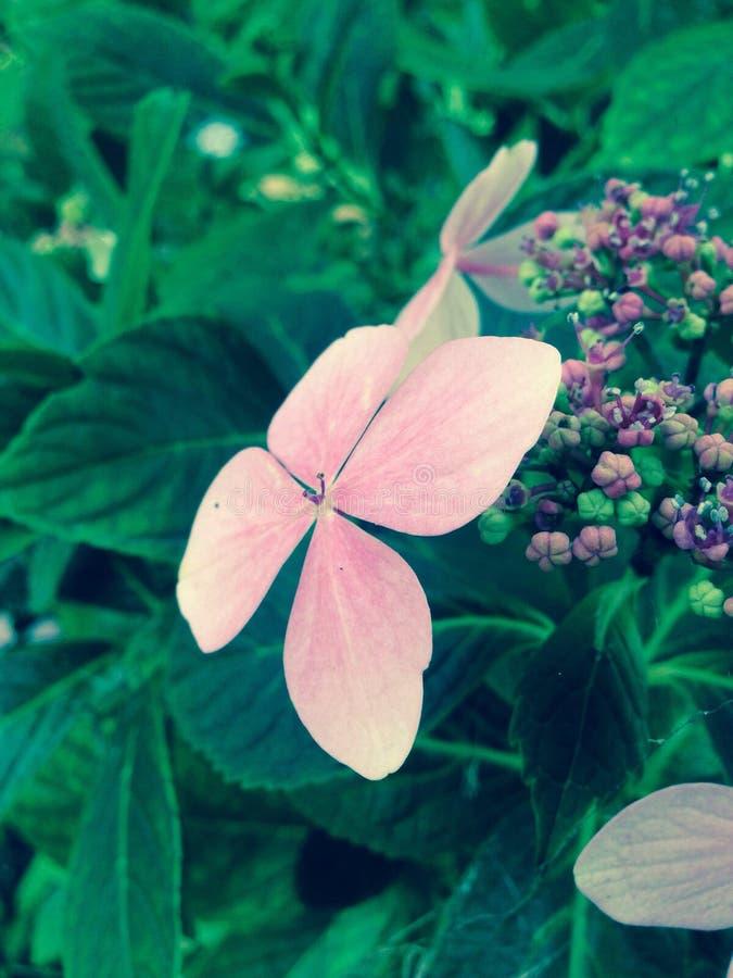 4 płatków kwiat obraz royalty free
