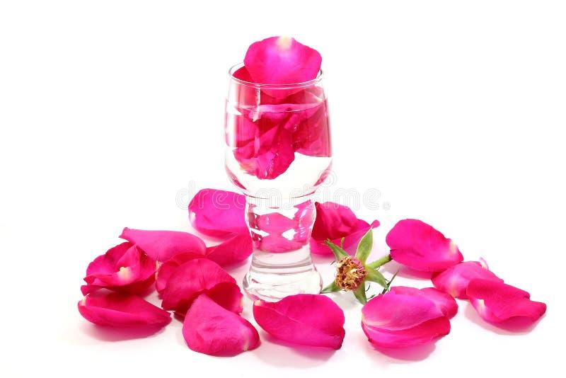 Płatki menchii róża w szkle fotografia stock