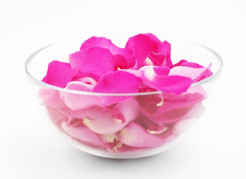 Płatki różowe róże w szklanym pucharze zdjęcie stock