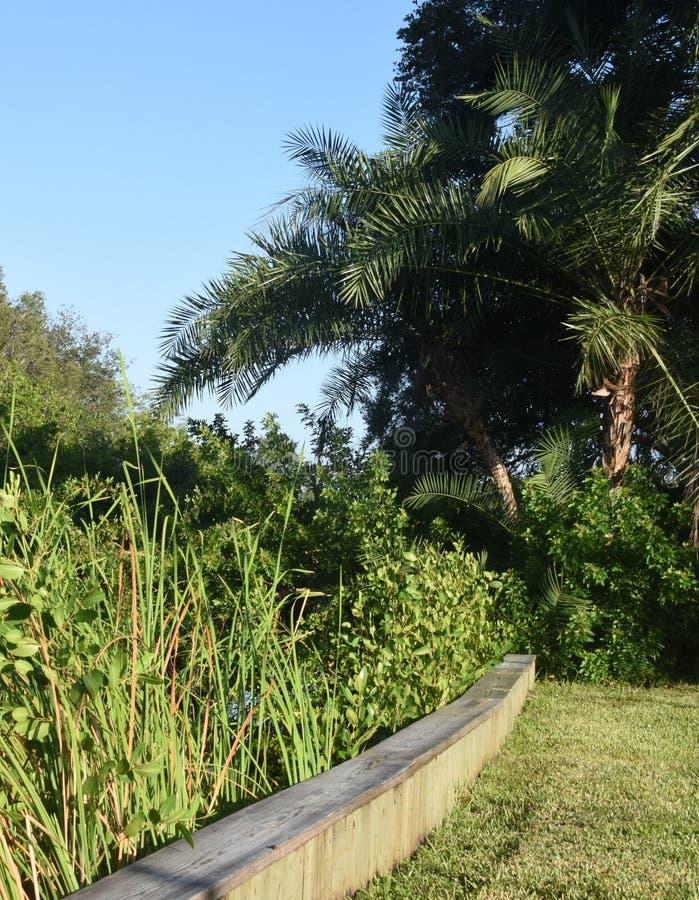 Płochy i drzewka palmowe w świetle słonecznym zdjęcia royalty free