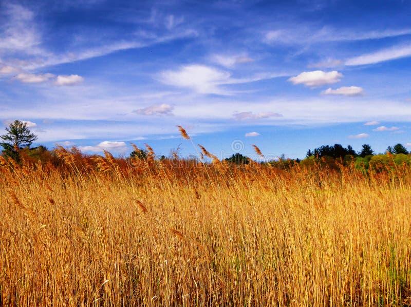 Płochy wśrodku Białego Pamiątkowego natura terenu zdjęcie stock