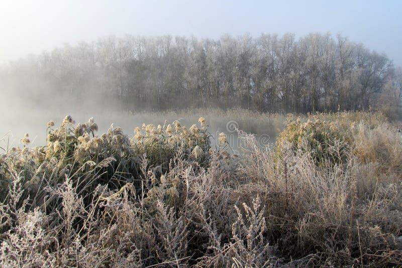 Płochy w tajemniczej ranek mgle nad wodną powierzchnią rzeka w wczesnym poranku zdjęcie stock