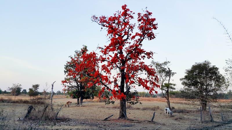 Płomień lasowy kwiat zdjęcie stock