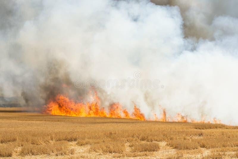 Płomienie Pali pszenicznego ścierniskowego pole obraz royalty free