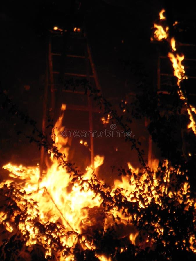 Płomienie przed drzewo b obrazy stock