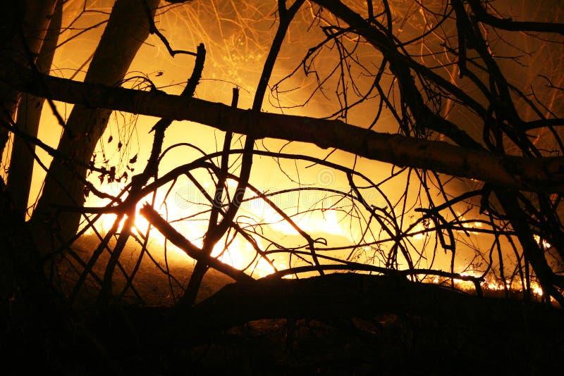 płonąca pola noc obraz royalty free