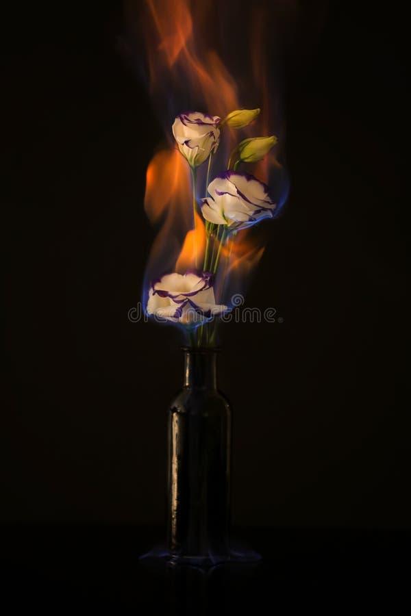 Płonący eustoma kwiaty obraz stock