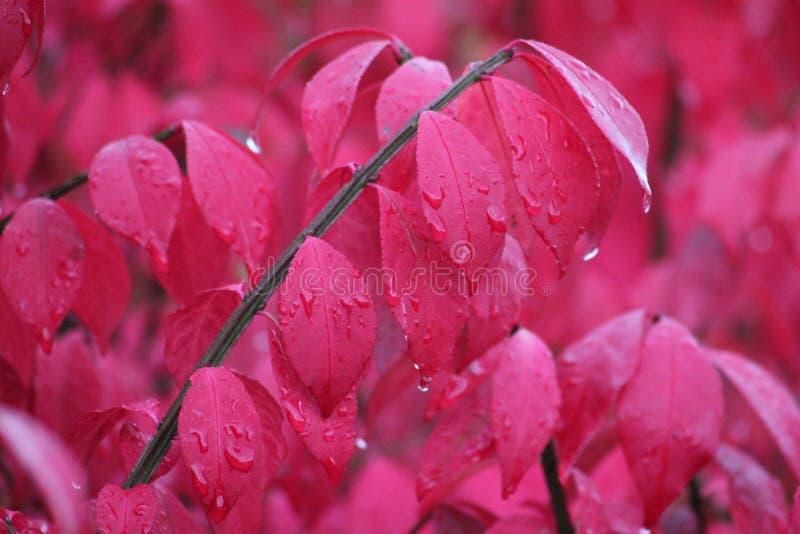 Płonący krzak w deszczu fotografia royalty free
