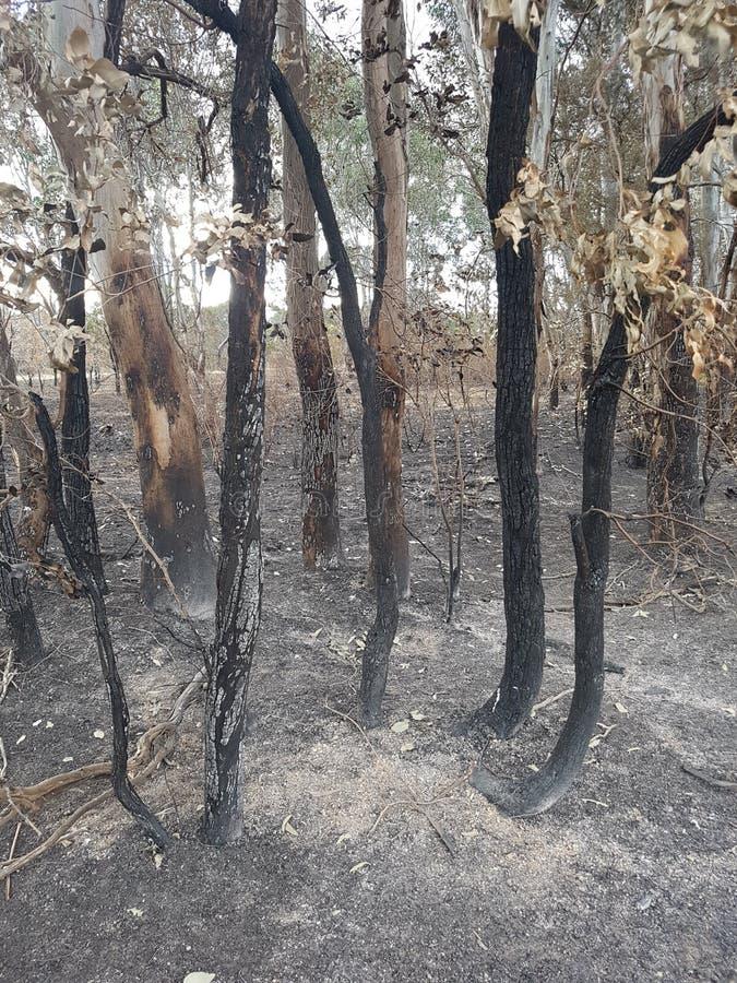 płonący krzew zdjęcia stock