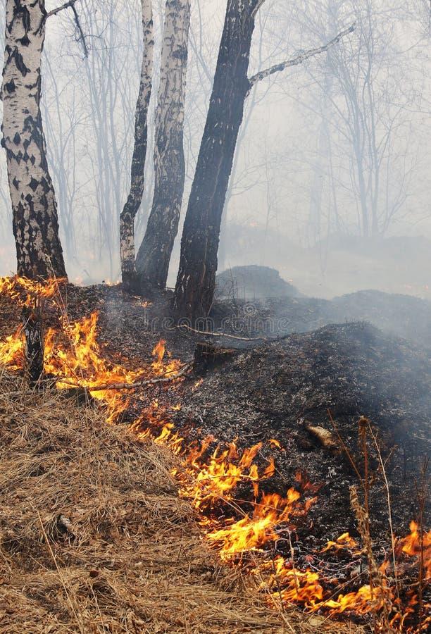 płonący las obraz stock