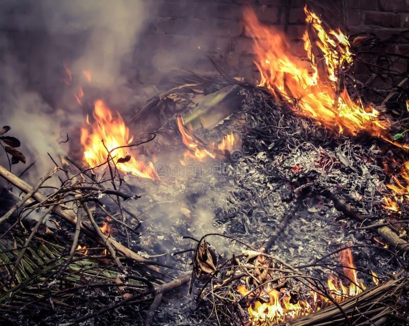 Płonący suszy liście zdjęcia royalty free