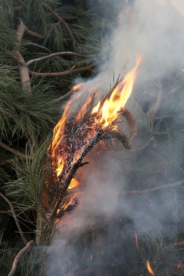 płonie drzewa zdjęcie royalty free