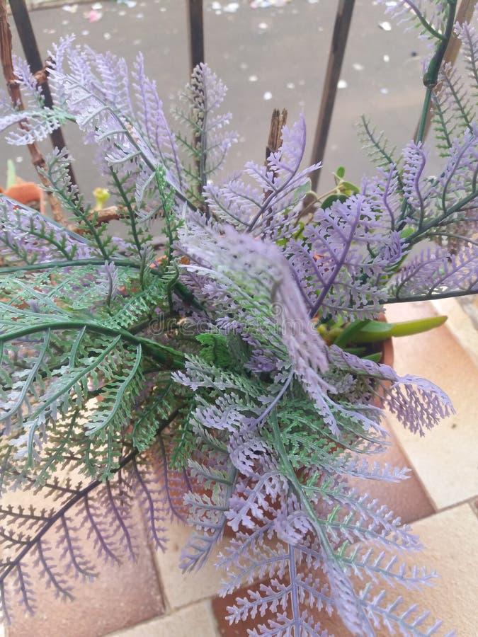 Płonie Katy kwiat Wiosna, makro- zdjęcie royalty free