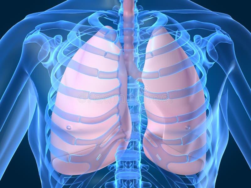 płuca ilustracji