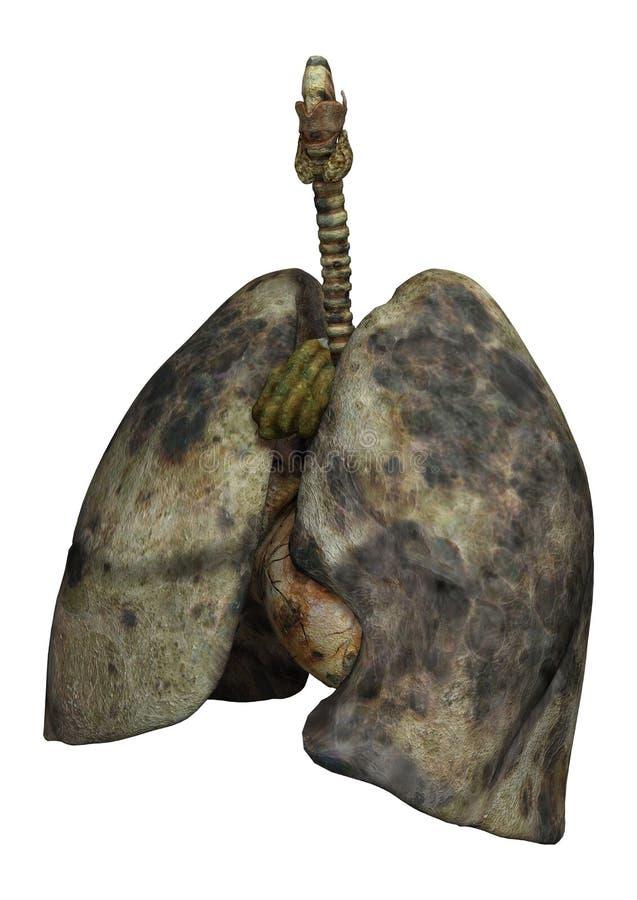 Płuca Żeńscy palacze royalty ilustracja