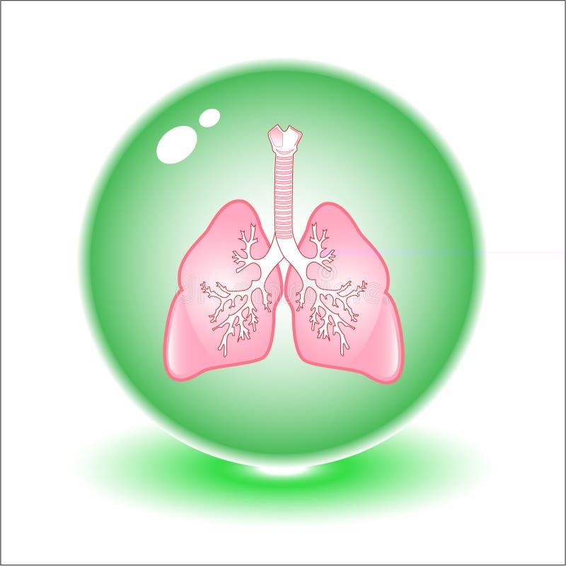 płuca ilustracyjni położenie royalty ilustracja