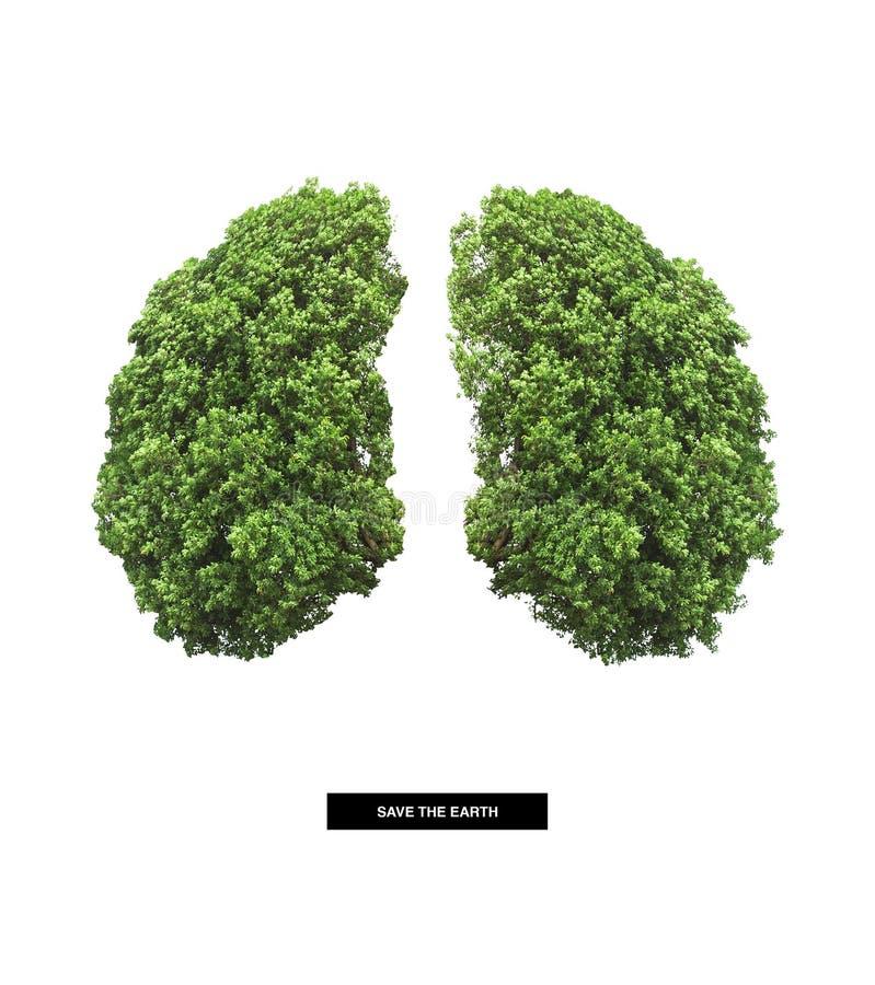 Płuco ziemia zdjęcie stock
