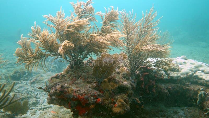 Płytka rafa w Pompano plaży, FL zdjęcie royalty free