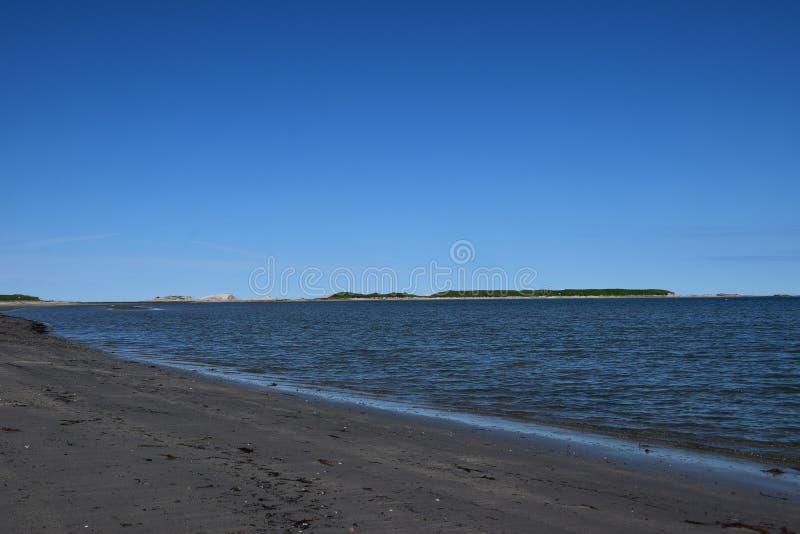 Płytka zatoki plaża, krowa Kierowniczy wodołaz fotografia royalty free