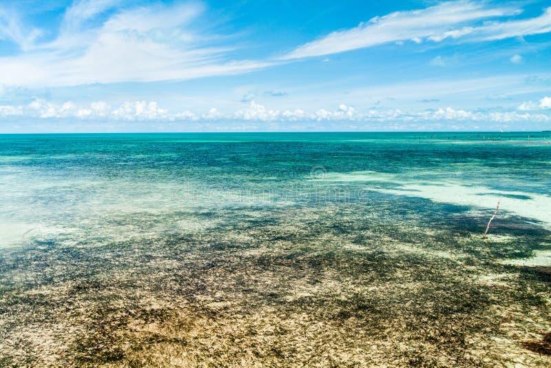 Płytki morze blisko Caye doszczelniacza wyspy, Bel obrazy royalty free