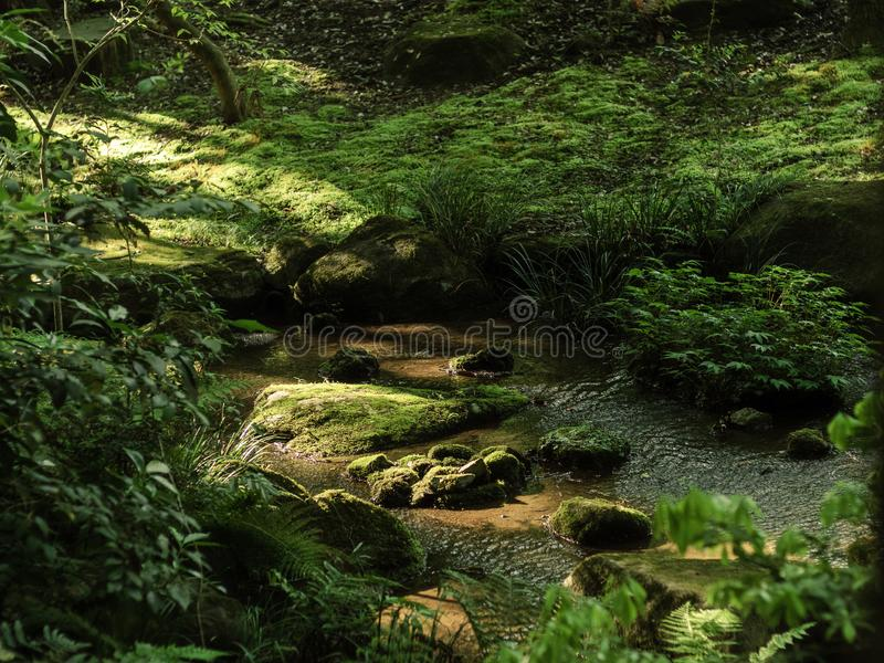Płytki skalisty strumień w lesie zdjęcie stock