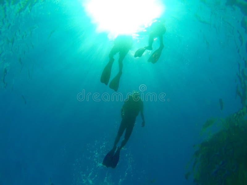Pływać do powierzchni zdjęcie stock