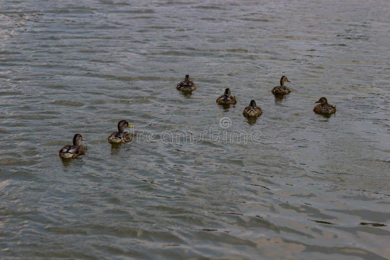 Pływać nurkuje przy jeziorem obraz stock