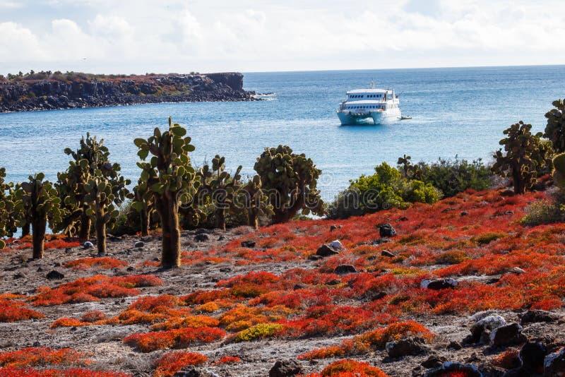 Pływa statkiem widzieć od ziemi i kilka opuntia kaktus i czerwieni succule obraz royalty free
