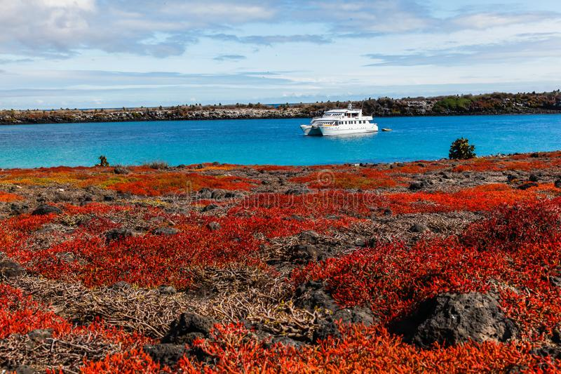 Pływa statkiem widzieć od ziemi i kilka opuntia kaktus i czerwieni succule fotografia royalty free