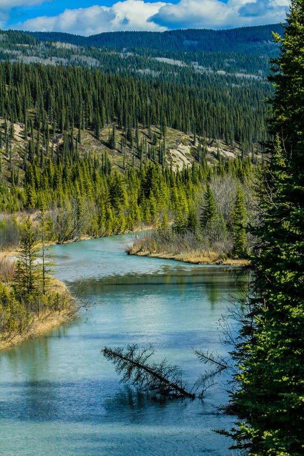 Pływacki drzewo w Południowej Saskatchewan rzece zdjęcie stock
