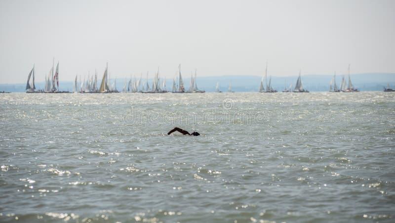 Pływaczka w jeziorze obraz royalty free