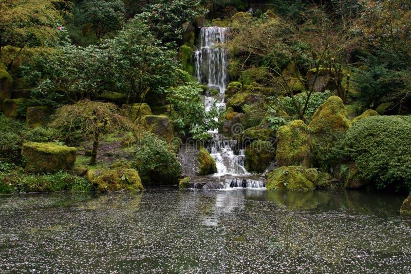Pływające Krajobrazu Płatki Kwiatów Obrazy Royalty Free