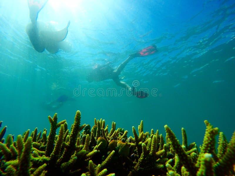 Pływanie nad korale obrazy stock