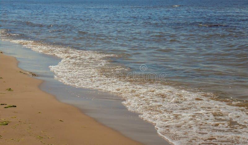 Pływowego nudziarza i morza piana zdjęcia royalty free