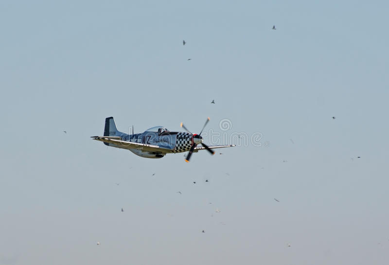 Download P-51 Mustang Surrounded By Birds Editorial Photo - Image: 16682021