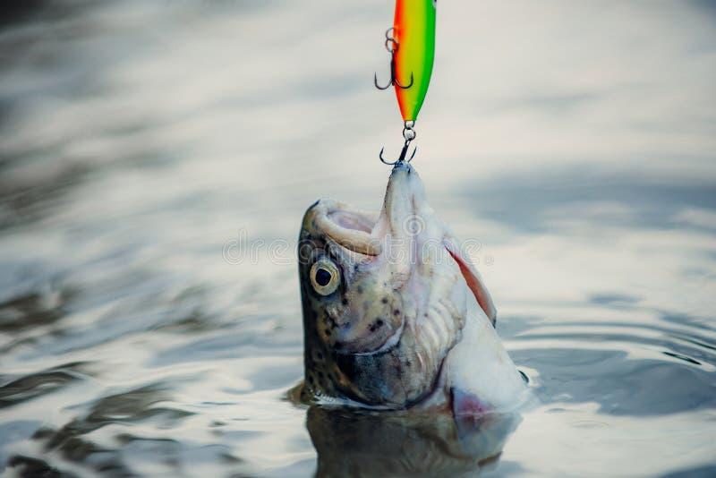 P?che sportive Pilotez la pêche - méthode pour attraper la truite Pêche avec la bobine de rotation Poissons attrapant des crochet photo libre de droits