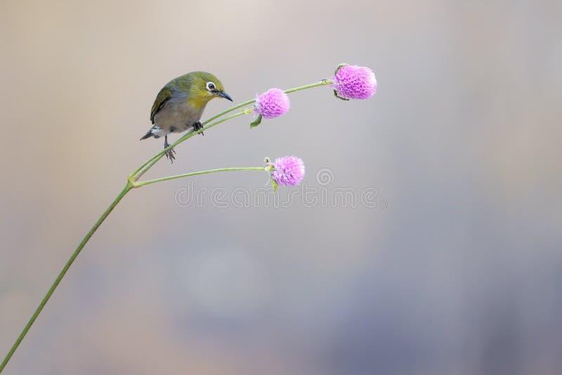 P?jaro y flor fotos de archivo libres de regalías