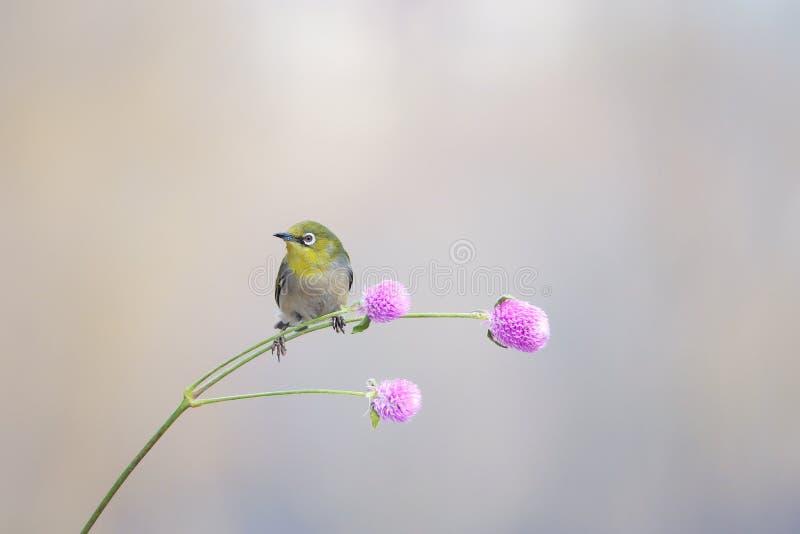 P?jaro y flor imagenes de archivo