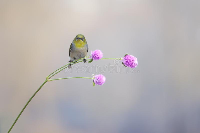 P?jaro y flor imágenes de archivo libres de regalías