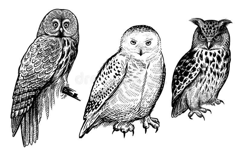 P?jaros del bosque Dibujo realista de los búhos aislados en el sistema blanco del fondo stock de ilustración