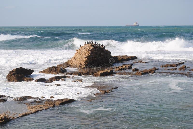 P?jaros en la roca imagen de archivo libre de regalías