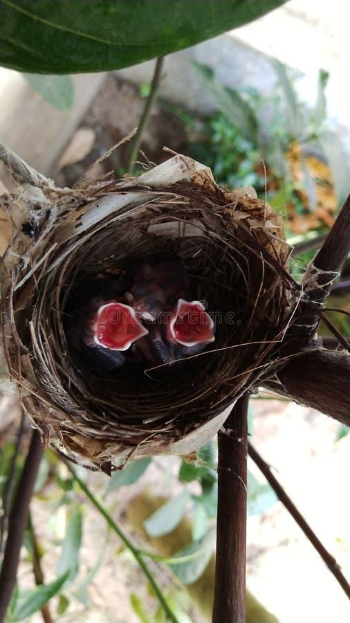 P?jaros hambrientos que esperan la comida imágenes de archivo libres de regalías