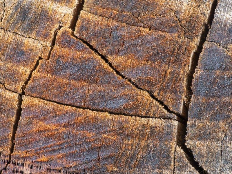 P?kni?cia w drewnie Stary fiszorek struktura zdjęcie stock