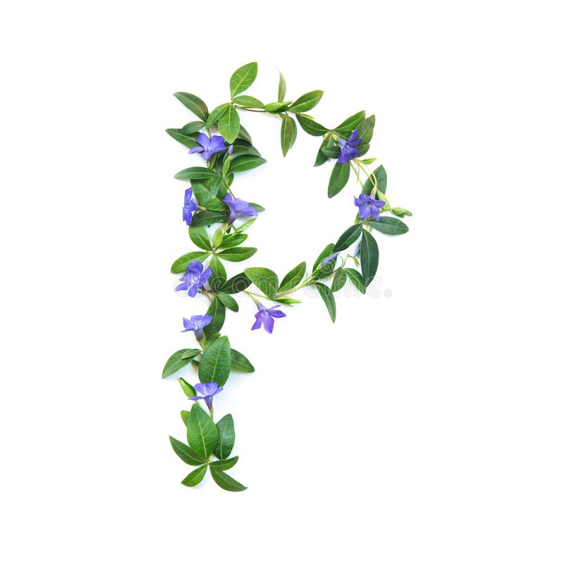 P, letter of the alphabet of flowers isolated on white background. The letter of flowers and leaves of periwinkle. Green and stock images
