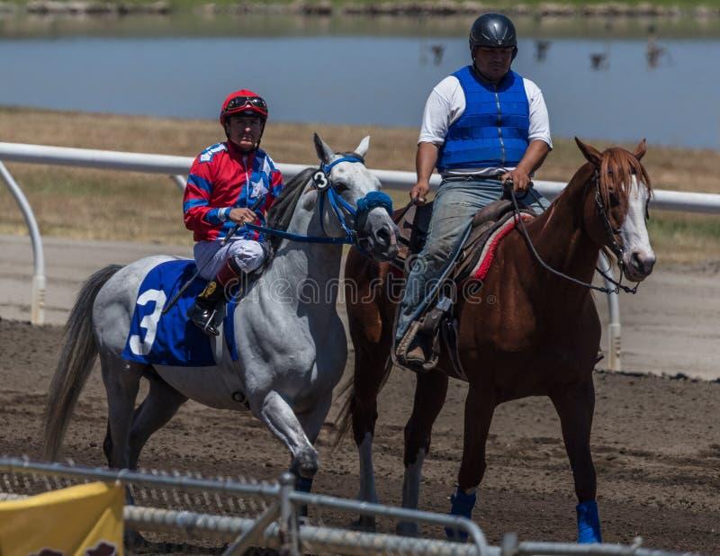 Pônei da ligação e cavalo de raça imagens de stock royalty free