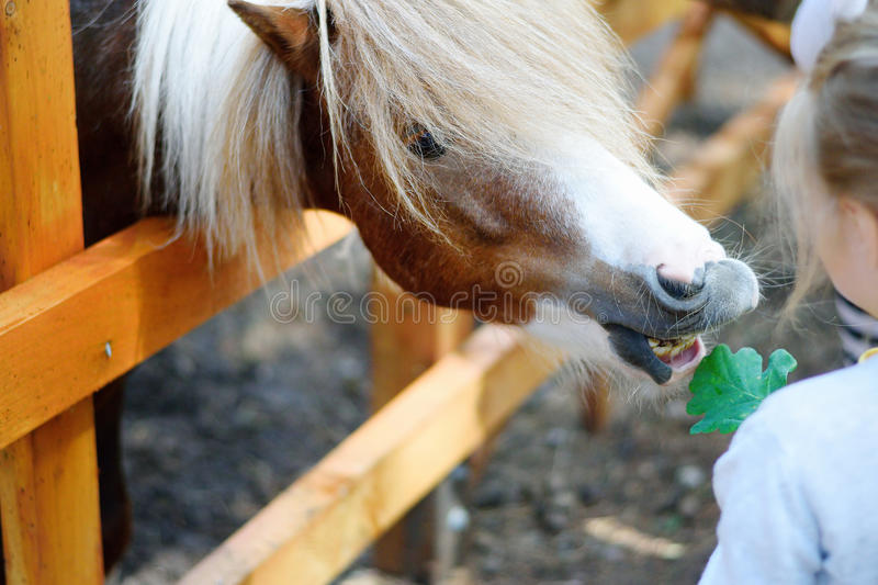 Pônei de alimentação da menina adorável no jardim zoológico imagem de stock royalty free