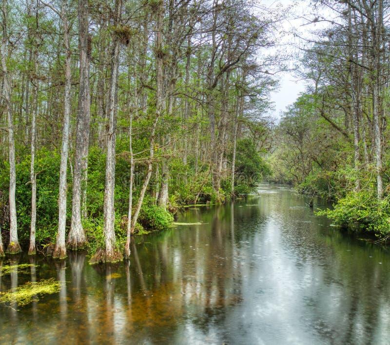 P?ntano na conserva nacional grande de Cypress, Florida, Estados Unidos fotografia de stock