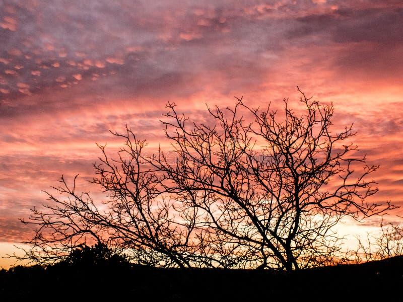 Pôr do sol lindo com as nuvens iluminadas rosa fotos de stock