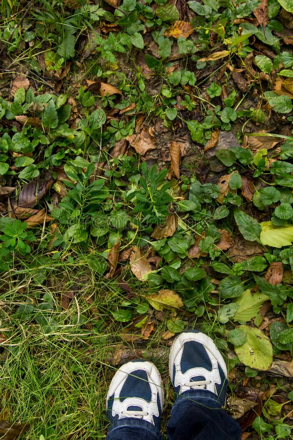 P?s f?meas em sapatas azuis do esporte na terra com grama fotos de stock